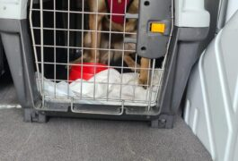 Polizei befreit Hundewelpen