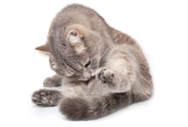 Internet-Betrug mit Katzenwelpen